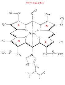 stock photo of hemoglobin  - Scan of an image drawn by hand of a hemoglobin - JPG