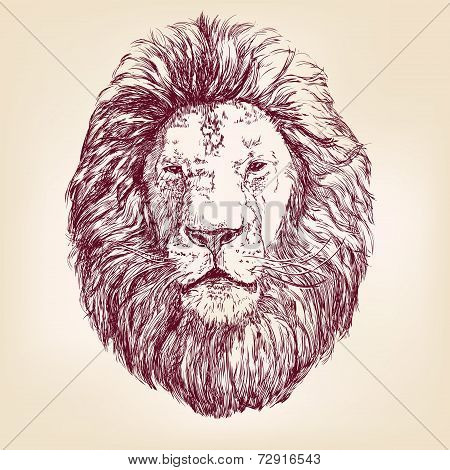Lion hand drawn vector llustration