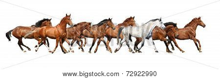 Herd Of Wild Horses Running Isolated On White