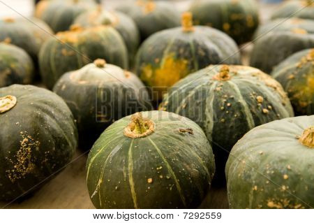 Squash at Farmer's Market