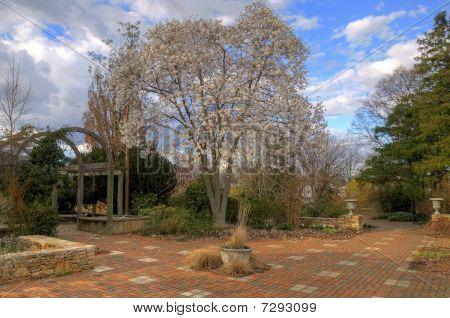 Loebner Magnolia