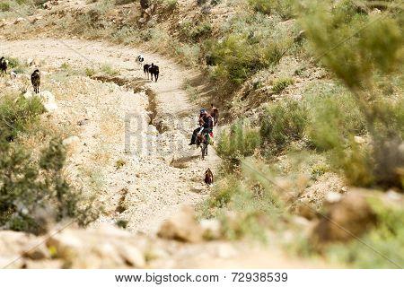 Shepherd In Jordan