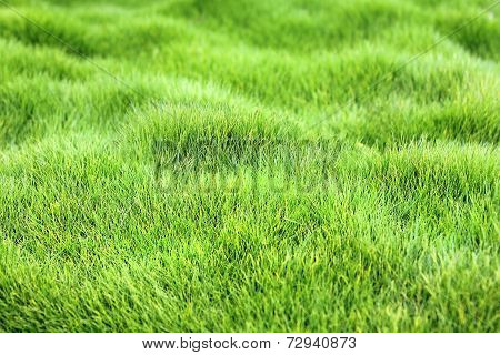Green Grass Carpet As Floral Background