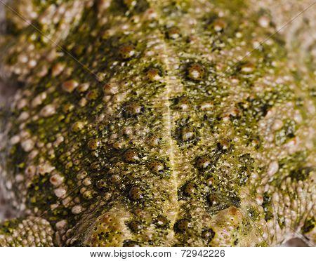 Toad Skin In Macro Frame