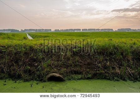 Ditch In Dutch Landscape