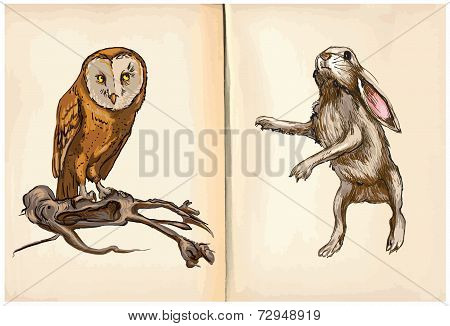 Owl And Rabbit - An Hand Drawn Vector