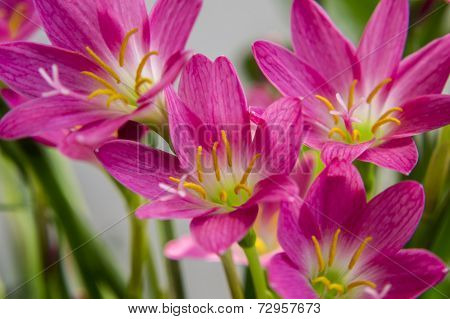 Few Lilly Flowers