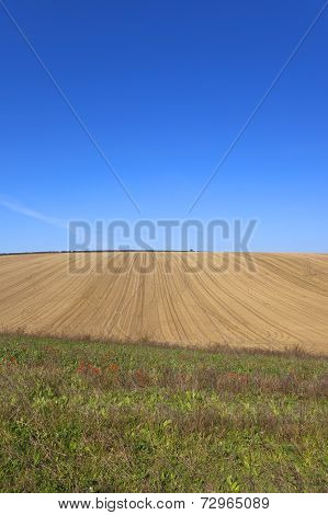 Harvested Field With Wildflowers