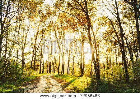 Sunlight Sunset Sunrise Woods In Forest