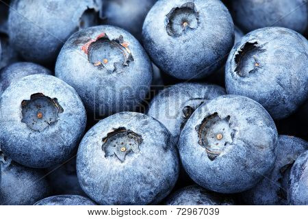 Freshly Picked Blueberry
