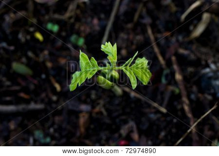 Green Sprout Growing From Seed On Soil.view From The Top