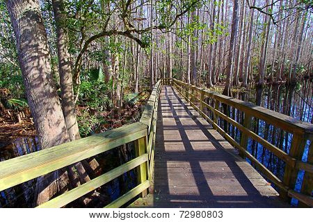 Highlands Hammock State Park Florida