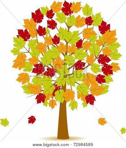 Autumn Tree 14