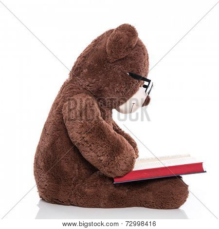 Teddy bear wearing glasses and reading a christmas story isolated on white background