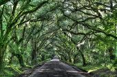 picture of bent over  - moss covered oak trees that are bent over making a tunnel over a road - JPG