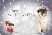 pic of weihnachten  - two dogs dressed as Santa Claus before glittering background with text frohe weihnachten - JPG