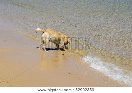 Dog On The Seashore