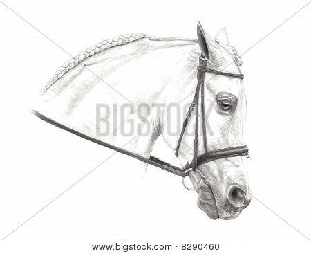 Hand Drawn Half Arabian Horse