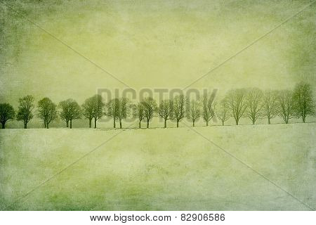 Leafless alley of trees on a snow field, textured
