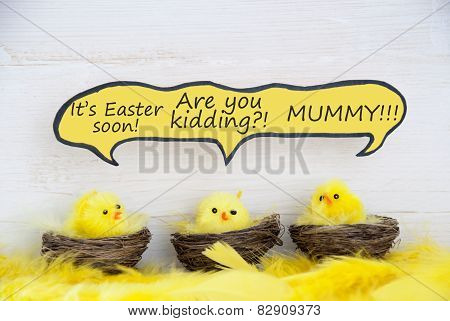 Three Easter Chicks With Comic Speech Balloon Telling A Joke