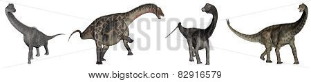 Jurassic sauropod dinosaurs - 3D render