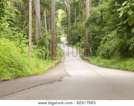 Curved Road In Forest On Hill