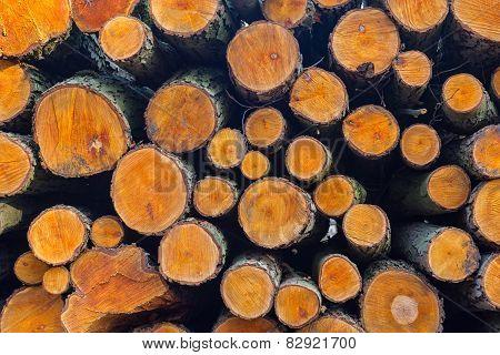 Wood Logs  Background