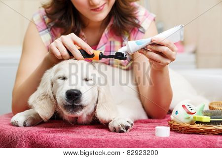 Girl cleaning teeth of her dog at home