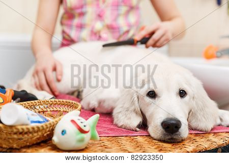 Girl grooming of his dog at home