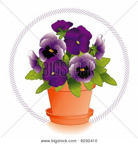 Lavender & Purple Pansies