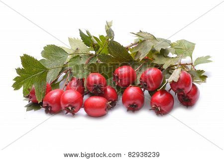Hawthorn fruit on white background
