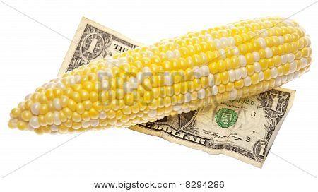 Cost Of Corn