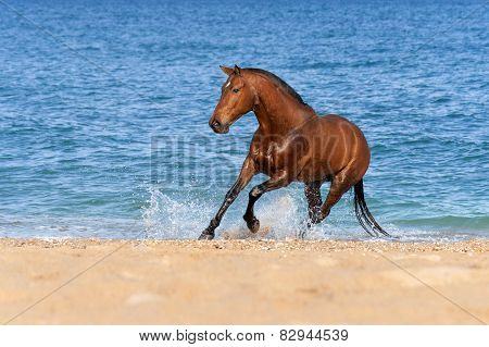 Stallion Springs on the sea beach on a beautiful background