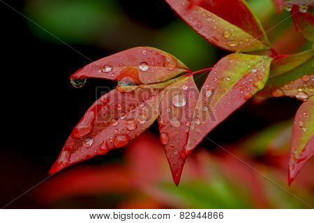 Raindrops On Leaves