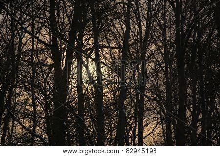 Sun In Winter Forest