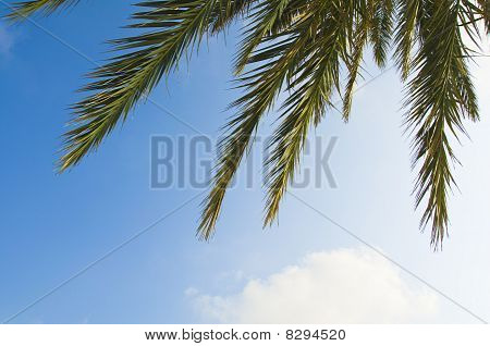Palm tree leaves on blue sky background