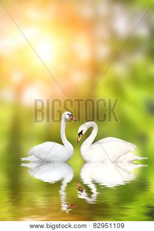 Two white swans on green background
