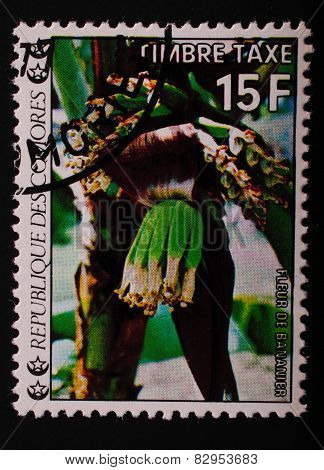 Comoros-circa 1977: Postage Stamp Printed In The Comoros Shows An Image Of Exotic Flowers Banana Pla