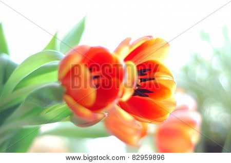 Tulips and leaves for the card