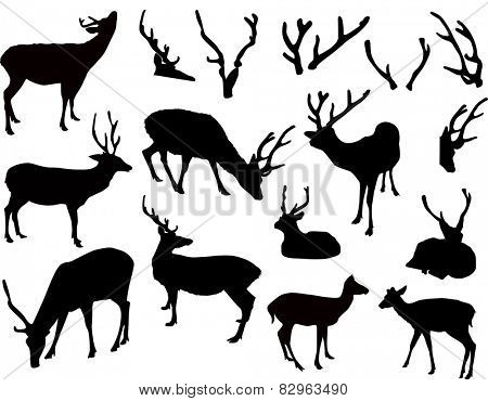illustration with deer and antler silhouettes isolated on white background