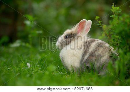 Cute Fluffy Rabbit Outdoors
