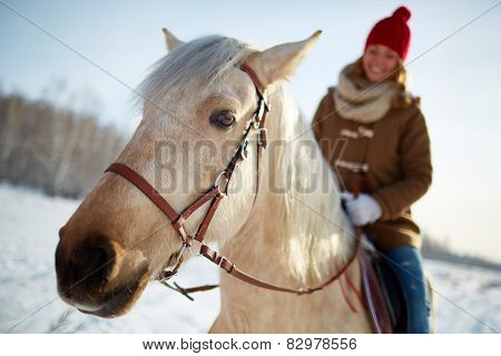 Purebred horse with young woman riding it in rural environment