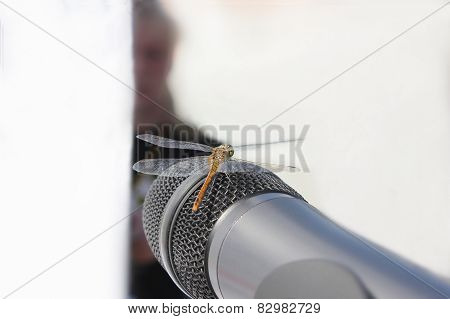 Dragonfly And Microphone On White Background
