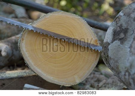 Cut log wood and saw