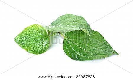 Betel leaf betel palm edible eating culture of thailand