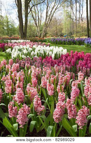 Spring Park in Keukenhof. Netherlands