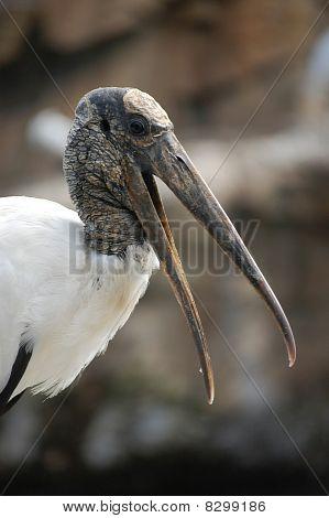 Ugly Bird 1