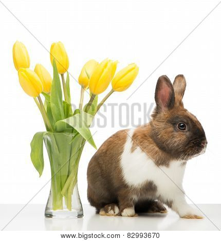 Brown bunny is near vase with yellow tulips
