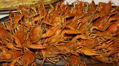 image of crawfish  - a lot of hot fresh boiled red crawfish - JPG