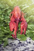 foto of craw  - One red river boiled crayfish with parsley on grey kitchen granite worktop in front view - JPG